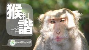 「猴諧和諧」影片 榮獲2020休士頓影展雷米白金獎