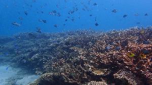 海洋保育的他山之石 「海洋永續研討會」邀請您參加